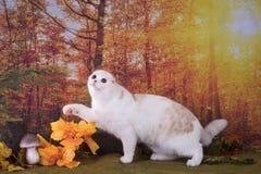 Promenades de chat sur le pré d'automne Photographie stock libre de droits