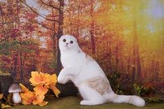 Promenades de chat sur le pré d'automne Photo libre de droits