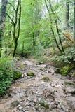 Promenades de forêt de la Savoie de Frances Photo stock