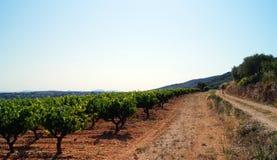 Promenera vägen vid vingården Arkivbild