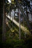 Promień światło słoneczne Fotografia Royalty Free