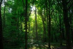 Promień świateł słonecznych drzew skrzyżowanie fotografia royalty free