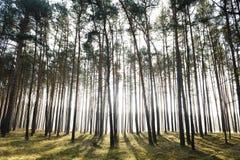 promienia lasowy tajemniczy słońce Zdjęcia Royalty Free
