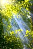 promienia słońce Obrazy Royalty Free