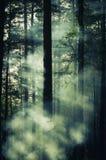 Promienie światła cięcie mgła Zdjęcia Royalty Free