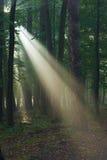 Promienie światło Fotografia Royalty Free