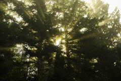 Promienie Światło słoneczne fotografia royalty free
