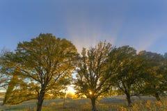Promienie światło słoneczne przez jesienie coloured drzew Obrazy Royalty Free