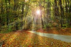 Promienie światło słoneczne przez lasu fotografia stock