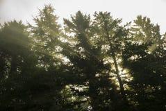 Promienie Światło słoneczne Wędkujący - zdjęcie royalty free