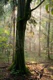 Promienie światło wchodzić do las obraz stock