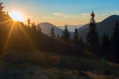 Promienie położenia słońce iluminują ogromne sosny Fotografia Stock