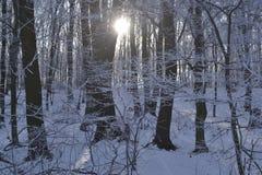 Promienie słońce łamają przez barrelsis Fotografia Royalty Free