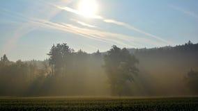 Promienie słońce i lotniczy opary w mgle zbiory