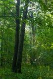 Promienie wchodzić do deciduous las światło słoneczne zdjęcie stock