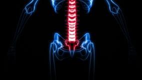 promieniowanie rentgenowskie Ludzki kościec (HD) ilustracja wektor