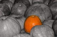 Prominent bright pumpkin among black and white. texture bright pumpkin on gray background autumn symbol. Prominent bright pumpkin among black and white. texture Stock Image