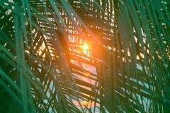 Sunset through leaves of palm trees on Indian ocean. Promise of heavenly rest. Sunset through leaves of palm trees on Indian ocean, Tropical journey. Well Stock Images