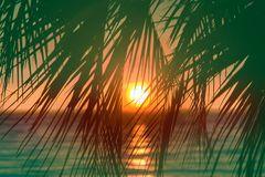 Sunset through leaves of palm trees on Indian ocean. Promise of heavenly rest. Sunset through leaves of palm trees on Indian ocean, Tropical journey. Well Stock Photos