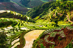 That promise terraces in Yunnan Stock Photo