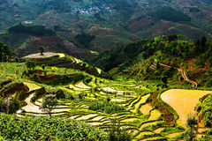 That promise terraces in Yunnan. Eastphoto, tukuchina, That promise terraces in Yunnan, Industry, Agriculture, Natural Royalty Free Stock Photography
