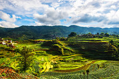 That promise terraces in Yunnan Stock Photography