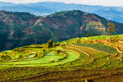 That promise terraces in Yunnan. Eastphoto, tukuchina, That promise terraces in Yunnan, Nature, Beauty Stock Image