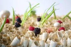Promoções dos vegetais Imagem de Stock Royalty Free
