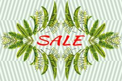 Promo banner sale tropical leaves mirror striped background royalty free stock photography