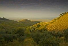 Promontorio de Gargano del paisaje, Apulia, Italia Fotografía de archivo