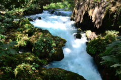 Prompt  impetuous white water in the river. Flow, stream Stock Images