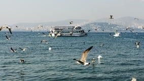 Promy towarzyszący seagulls unosi się na widoku książe Fotografia Royalty Free