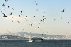 Promy towarzyszący seagulls unosi się na widoku książe Zdjęcie Royalty Free