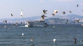 Promy towarzyszący seagulls unosi się na widoku książe obrazy stock