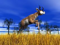 Pronghorn antelope jumping Royalty Free Stock Photos