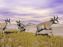 Pronghorn antelopes in the wild - 3D render Royalty Free Stock Images