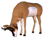 Pronghorn in the feed recordings. 3D rendering of a pronghorn in the feed recordings Stock Photography