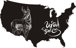 Pronghorn and U.S. outline map Stock Image