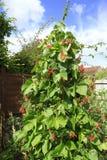 Pronkbonen in een tuin van het Land Royalty-vrije Stock Fotografie