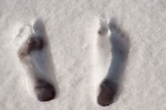 Top view of bare foot prints in the snow royalty free stock image