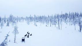 Propósito aéreo de dogsledding en el invierno ártico de Lapla finlandés Imagen de archivo