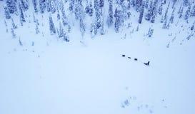 Propósito aéreo de dogsledding en el invierno ártico de Lapla finlandés Fotografía de archivo libre de regalías