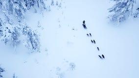 Propósito aéreo de dogsledding en el invierno ártico de Lapla finlandés Fotografía de archivo