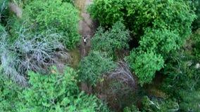Propósito aéreo del ciclo en el parque Vertical, de arriba hacia abajo almacen de metraje de vídeo