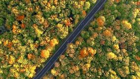 propósito aéreo 4k de la conducción de automóviles abajo de un camino a través de bosque del otoño almacen de video