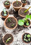 Propagación de succulents múltiples de cortes en pequeño terracott imagen de archivo libre de regalías