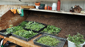 Propagation table. A propagation table in a plant nursery with trays of succulent cuttings ready to be potted Royalty Free Stock Photos