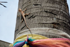 Propager de caméléon un arbre Photographie stock