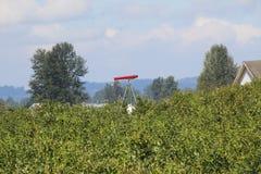 Propane Canon in Farm Field Stock Image