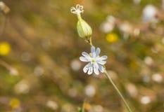 Propeller ähnliche Blume auf einem wilden herbstlichen Gebiet Stockfoto